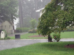 Murrieta Plumber, lawn and tree in the rain